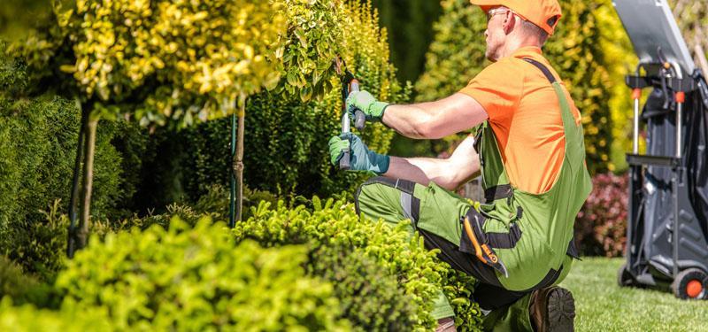 Pielegnacja terenów zieleni